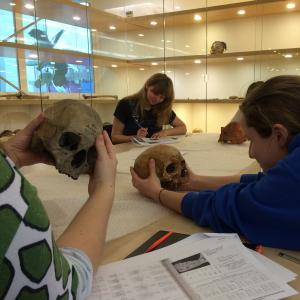 Cambridge archaeology students examine skulls as part of a practical in the Centre for Human Evolutionary Studies