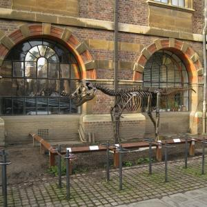 arth Sciences Department Dinosaur. This sculpture is outside the Sedgwick Museum of Geology, one of the many scientific museums attached to the departments. Photo